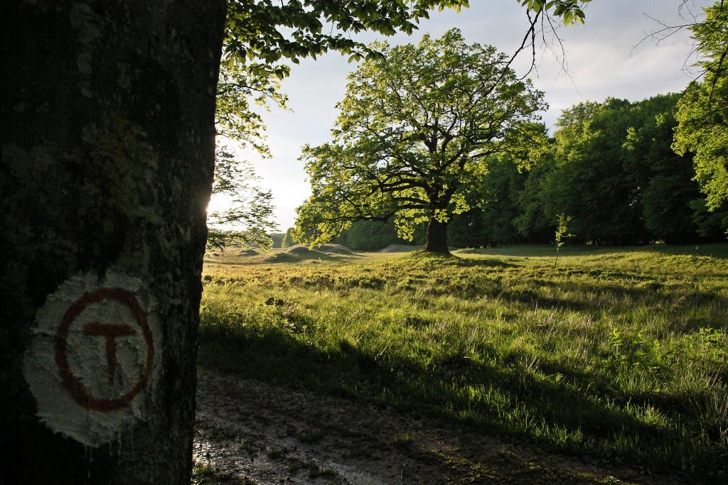 rezervatie stejari sighisoara
