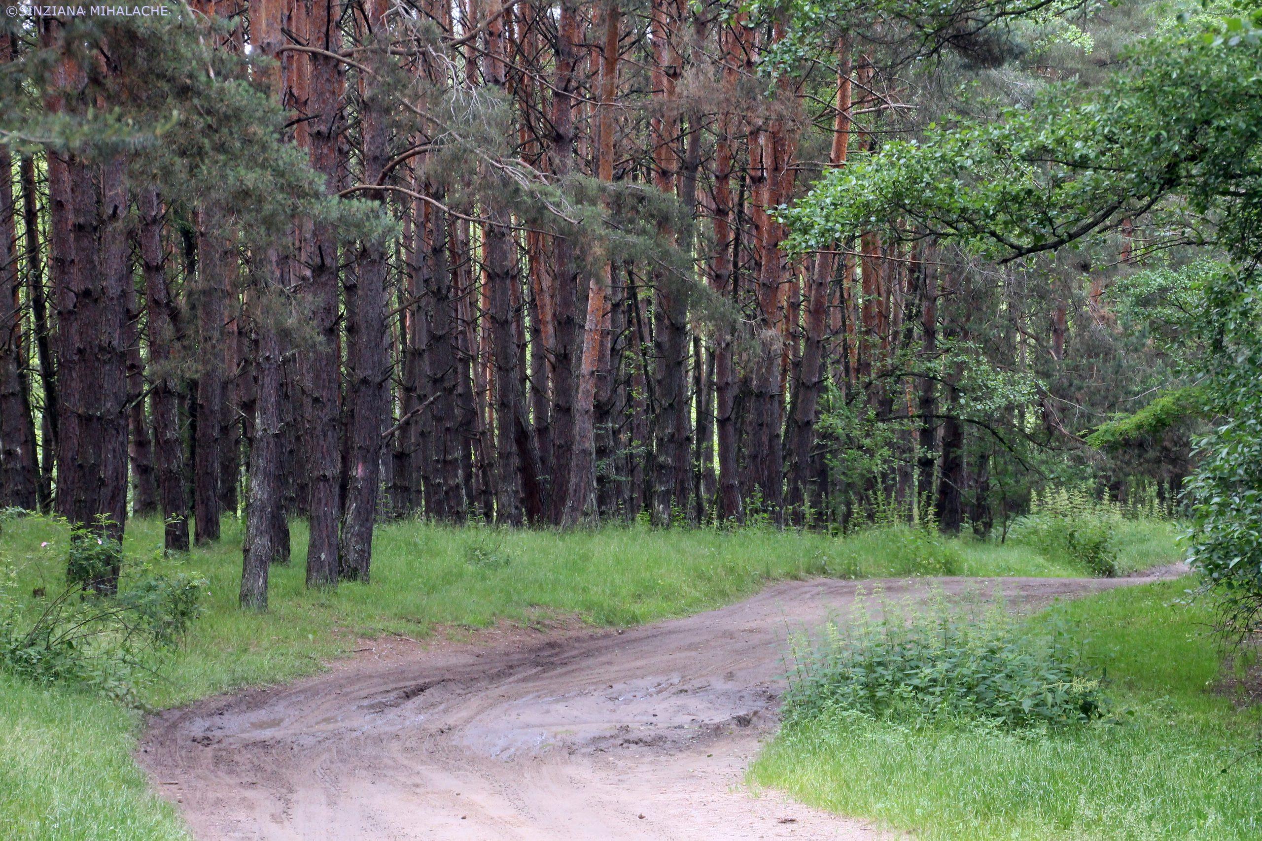 drum forestier pe traseul zanelor la reci