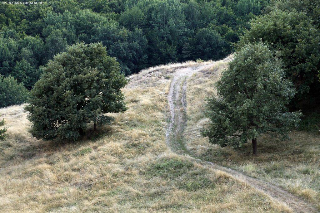 peisaj de la mlastina pesteana